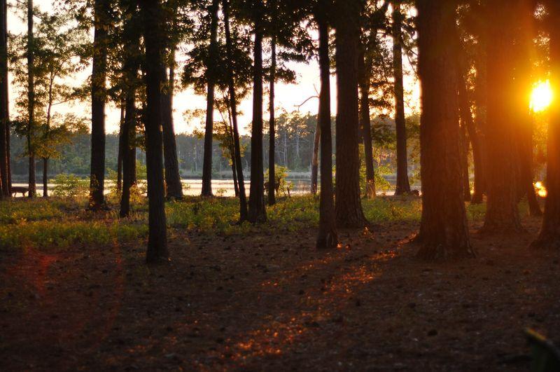Spring camping-71553